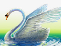 Swan, Water, Transparent, Blue, White, Wings, Landing, Digital Illustration